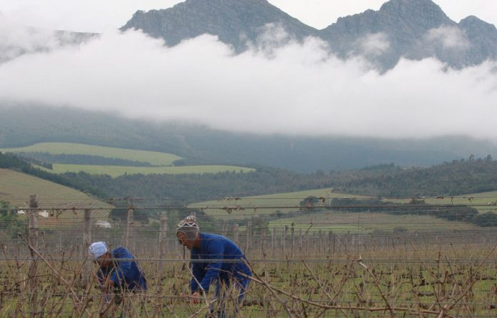The country's table grape industry was among those hardest hit by strikes.