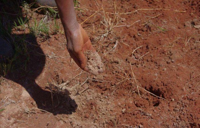 Pale mine dust coats the soil in Snake Park