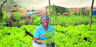 A female entrepreneur from Ga-Mokgotho whom MUS provided with a water tank is producing great plants. One of 95 community water standpipes installed by MUS Project in Ga-Mokgotho