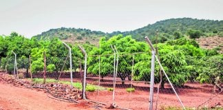 Leah Maebane's orchard in  Ga-Mokgotho is supported by a water tank