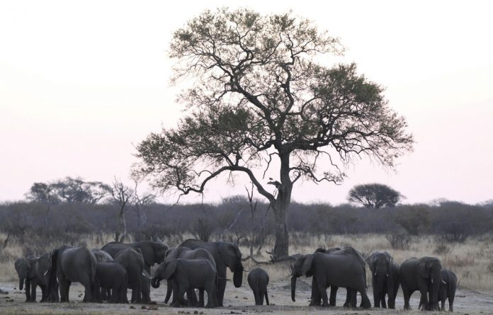 The narrative that Botswana's elephant population is exploding and has exceeded the country's carrying capacity is repeatedly used to rationalise trophy hunting and the ivory trade.