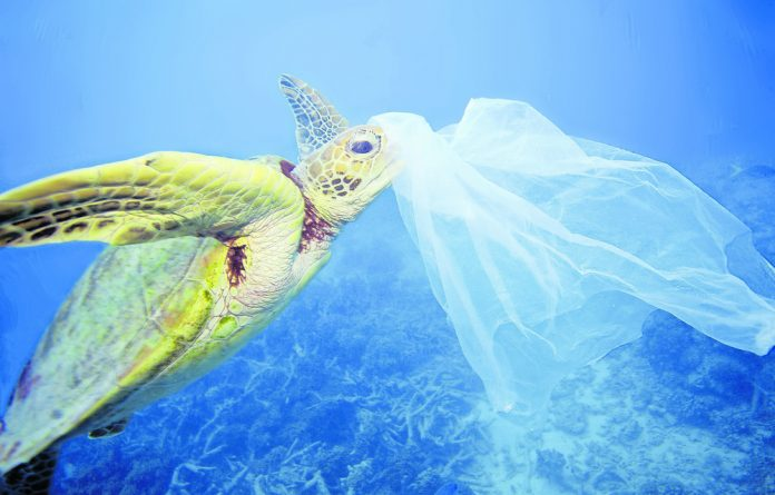 Above: Green sea turtle with a plastic bag