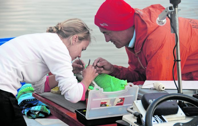 Dr Amber Childs and Professor Paul Cowley surgically implanting a transmitter in a juvenile dusky kob in the Sundays Estuary.