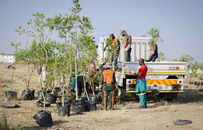 Johannesburg City Parks and Zoo teams collecting trees for planting