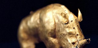 The Mapungubwe gold rhino is exhibited at the Javett-UP Art Centre's  interactive Gold of Africa Gallery