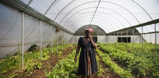 Refiloe Molefe grows everything from spinach to green beans and carrots. She also makes juices and sells her produce.