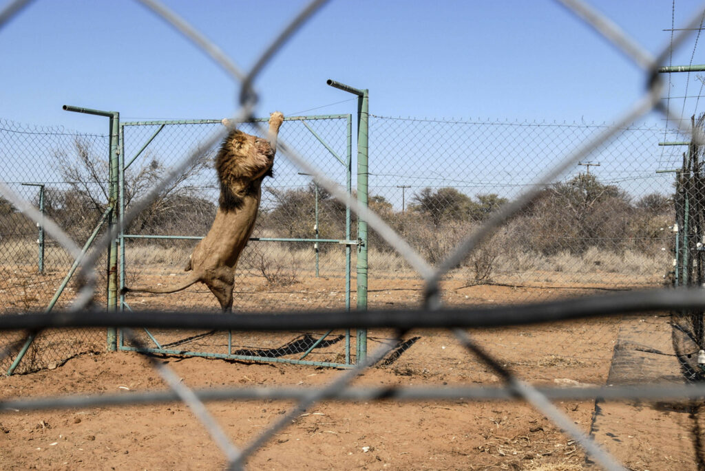 , Wildlife owners may target state, The World Live Breaking News Coverage & Updates IN ENGLISH